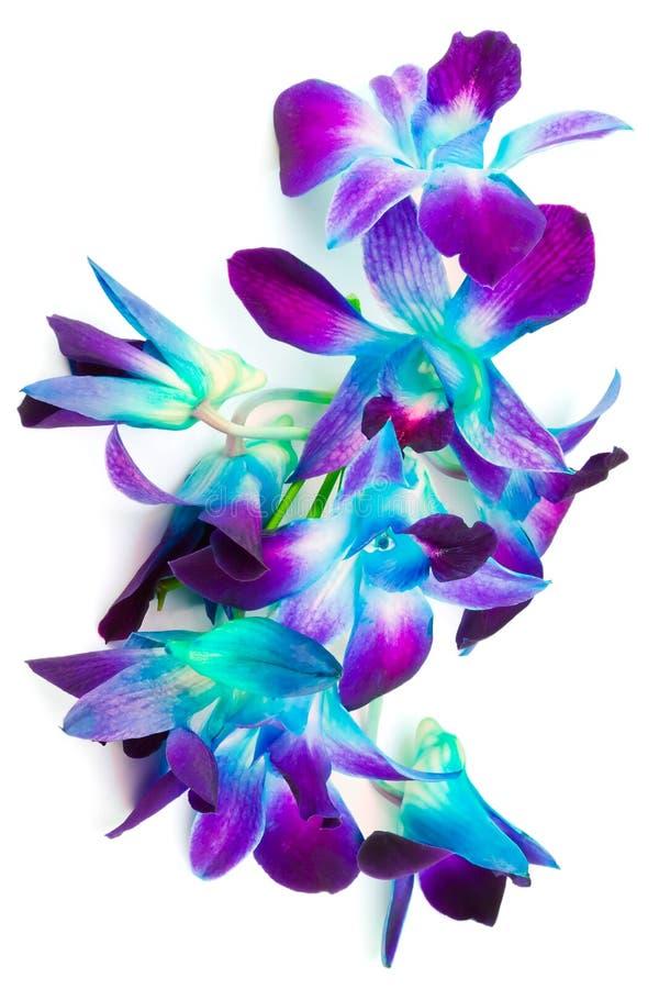 purpurowe zielone orchidee fotografia stock