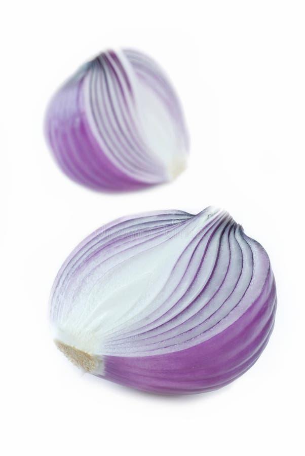 Purpurowej cebuli żarówka zdjęcia royalty free