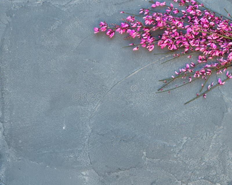 Purpurowej wiosny kwitnąca gałąź na popielatym betonu kamienia tle, odgórny widok, kopii przestrzeń obrazy stock