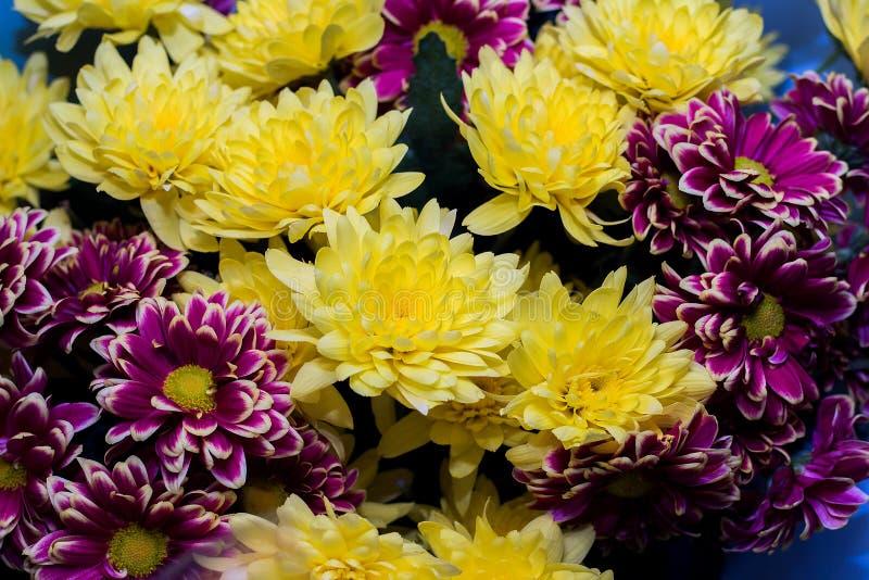 purpurowi astery i żółte chryzantemy, bukiet kwiaty, w górę obrazy royalty free