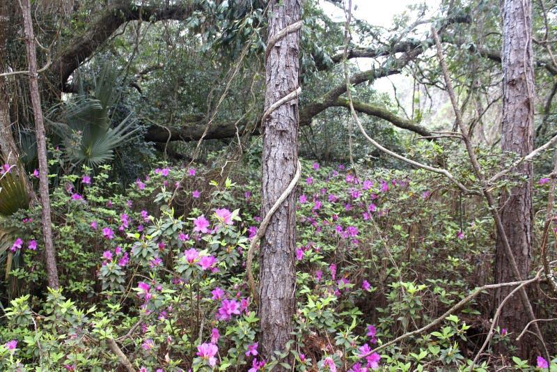 Purpurowi kwiaty jaśnieją drewna zdjęcie stock