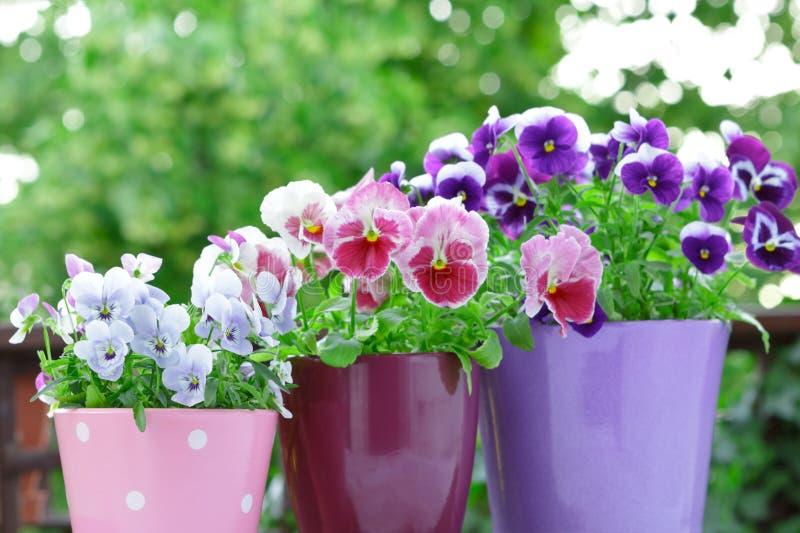 Purpurowi lili czerwoni pansies garnki balkonowi obraz stock