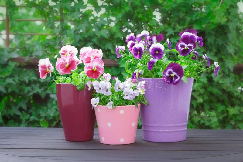 Purpurowi lili czerwoni pansies garnki balkonowi zdjęcia royalty free