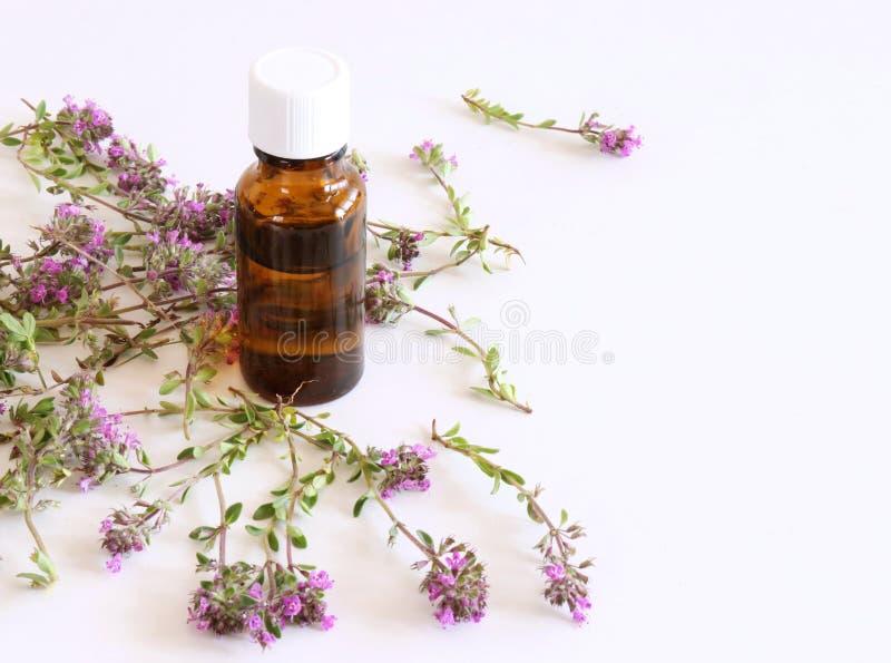 Purpurowi mali Thymus pulegioides, błonie wymieniają cytryny macierzanki Istotny olej i rośliny na białym tle i leczniczy zdjęcie stock