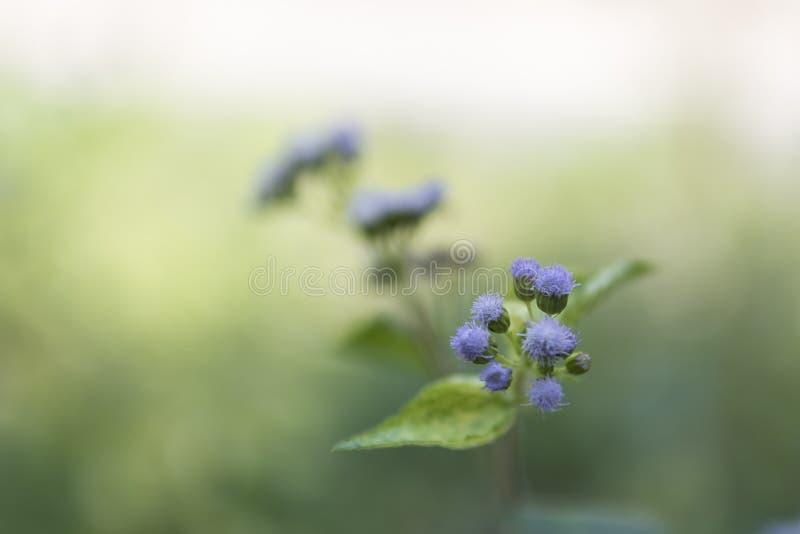 Purpurowi trawa kwiaty zdjęcia stock