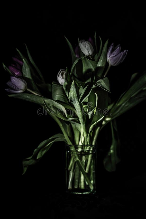 Purpurowi tulipany w szklanej wazie obraz stock