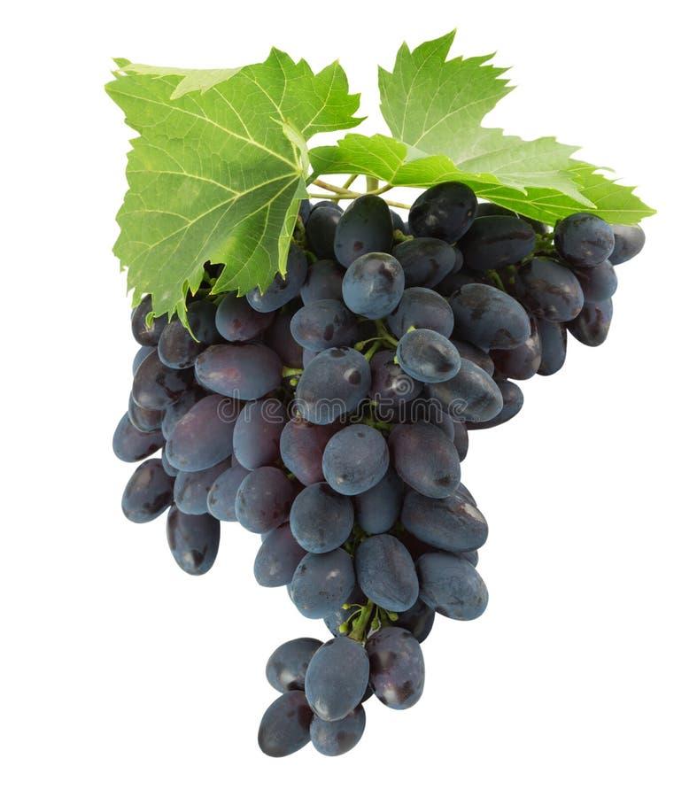 Purpurowi winogrona odizolowywający na białym tle obrazy stock