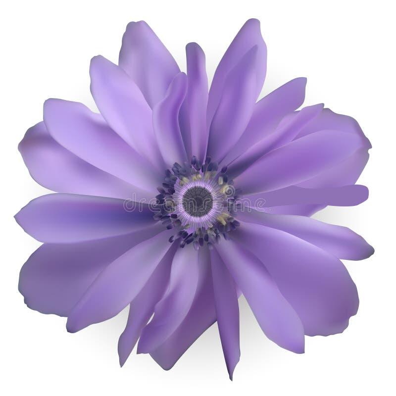 Purpurowy Anemonowy Kwiat Realistyczna wektorowa ilustracja royalty ilustracja