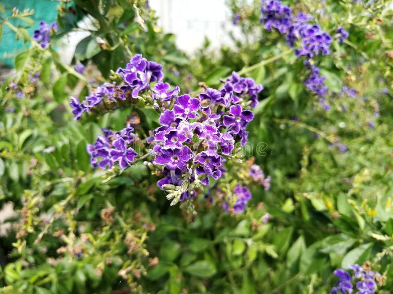 Purpurowy Bouqute kwiat fotografia stock