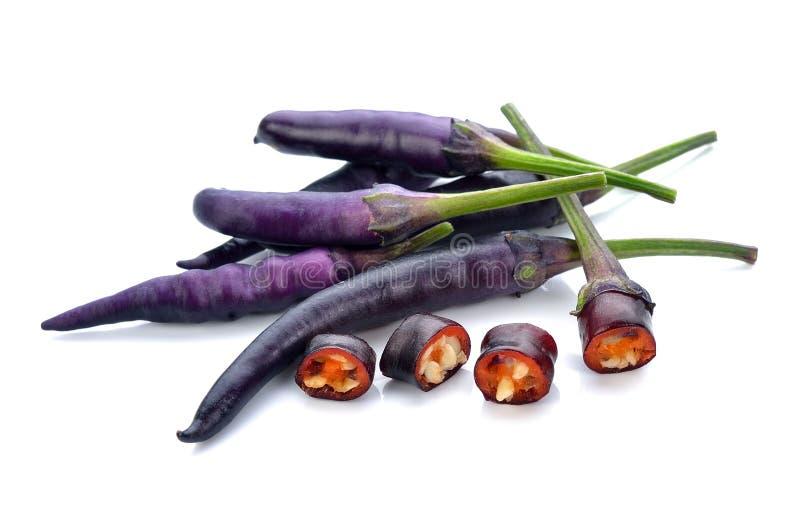 Purpurowy chili na bielu obrazy royalty free