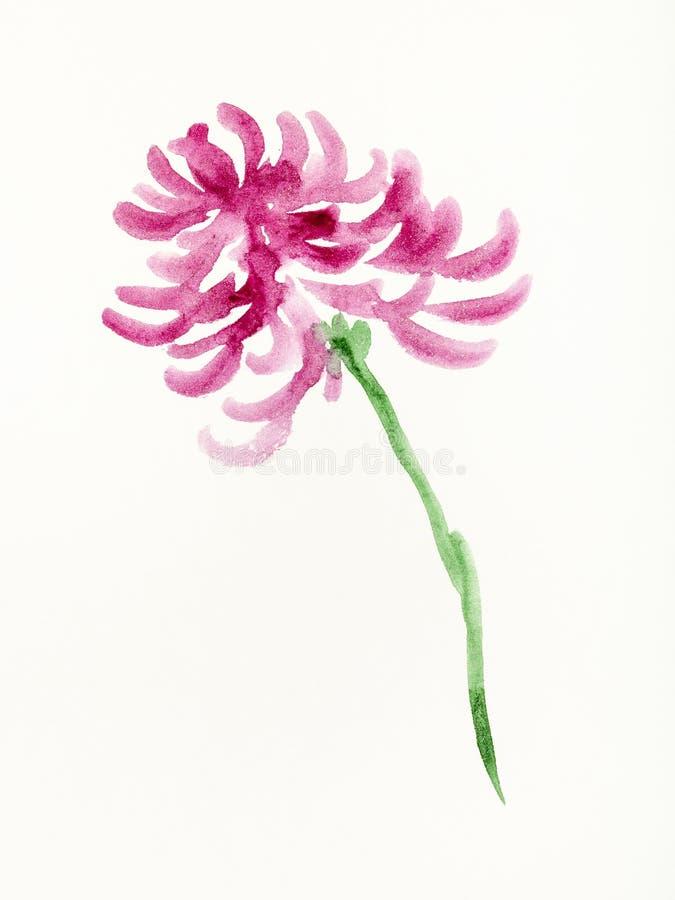 Purpurowy chryzantema kwiat jest ręką rysującym na papierze ilustracja wektor