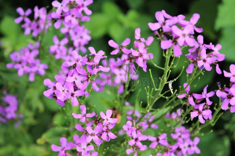 Purpurowy dziki kwiat obraz stock