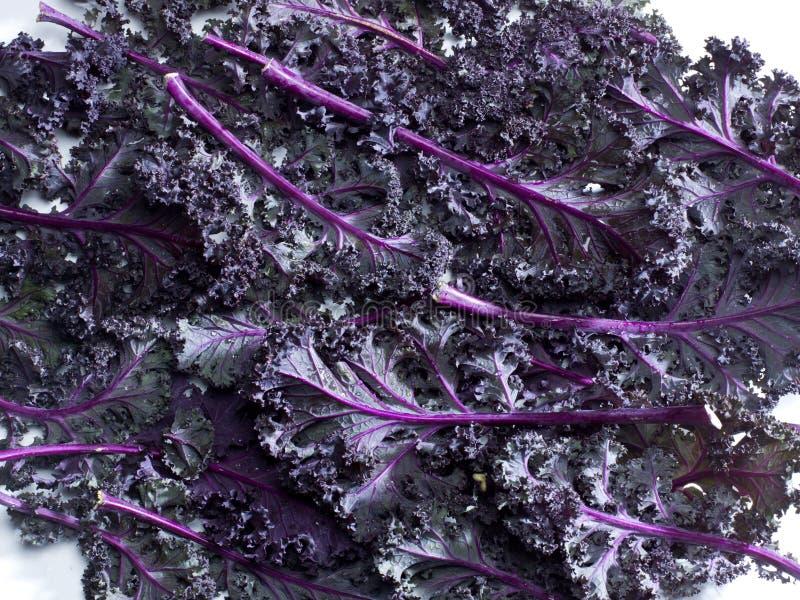 Purpurowy Kale zdjęcie stock