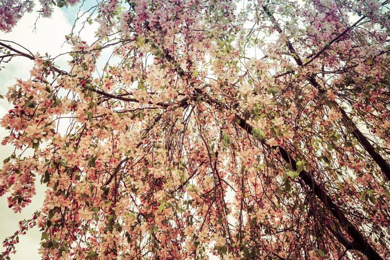 Purpurowy kapuściany kwiat zdjęcie stock