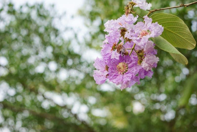 Purpurowy kwiatostanu kwiat zdjęcia stock