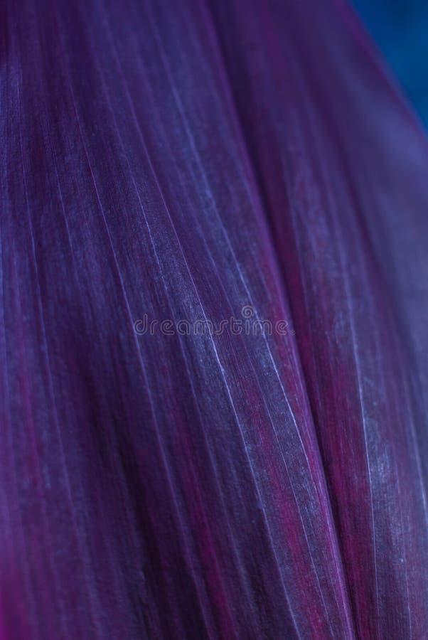 Purpurowy liścia wzór obrazy royalty free