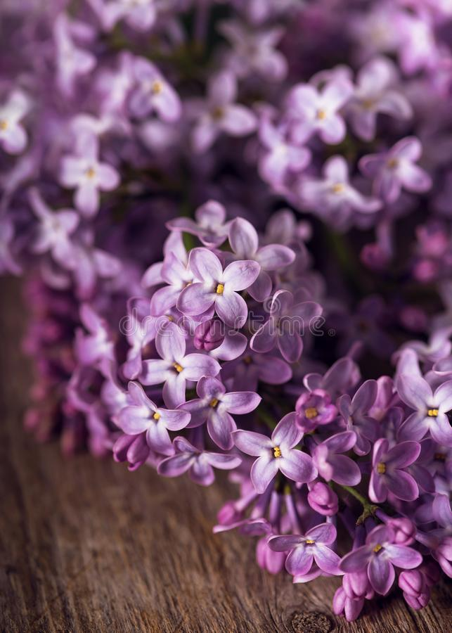 Purpurowy lily okwitnięcie na nieociosanym drewnianym tle fotografia royalty free