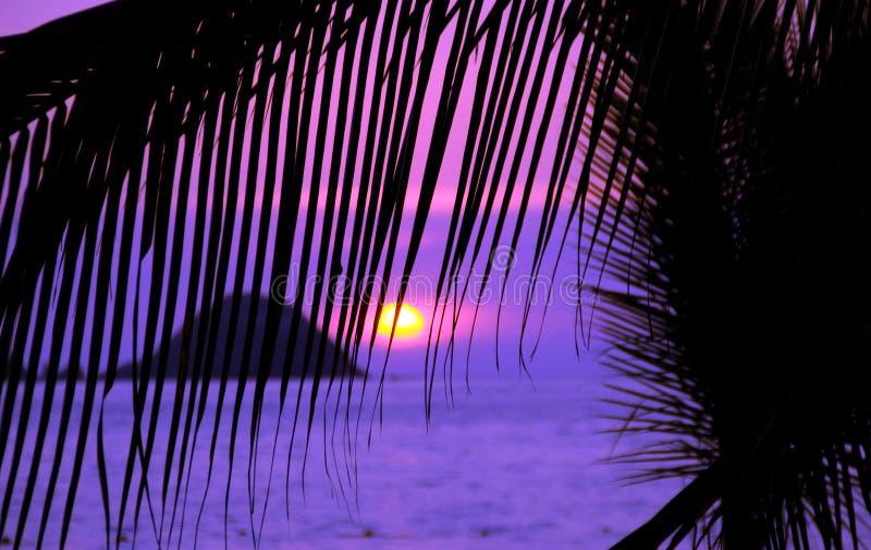 purpurowy niebo zdjęcie royalty free