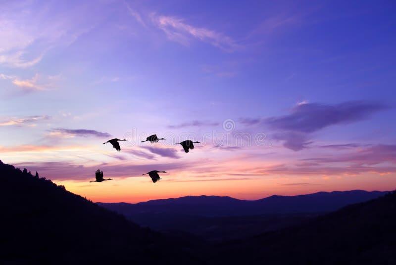 Purpurowy niebo na zmierzchu lub wschodzie słońca z latających ptaków naturalnym backgr fotografia stock