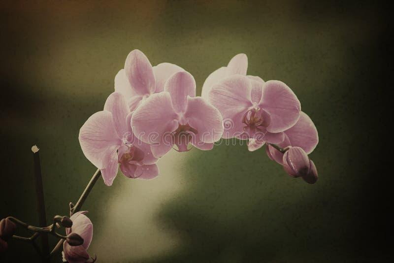 Purpurowy Storczykowy Kwiat obrazy royalty free