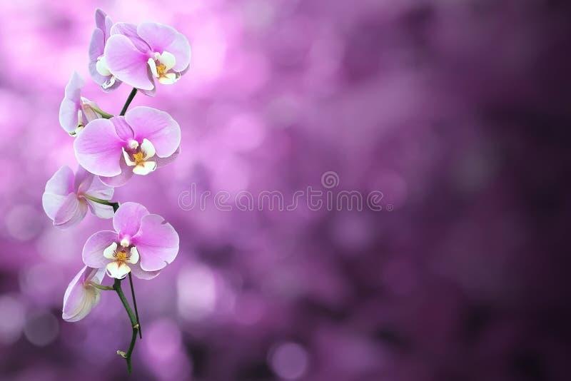 Purpurowy Storczykowy kwiat z ścinek ścieżką fotografia stock