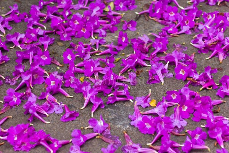 Purpurowy tubowych kwiatów spadek zdjęcie stock