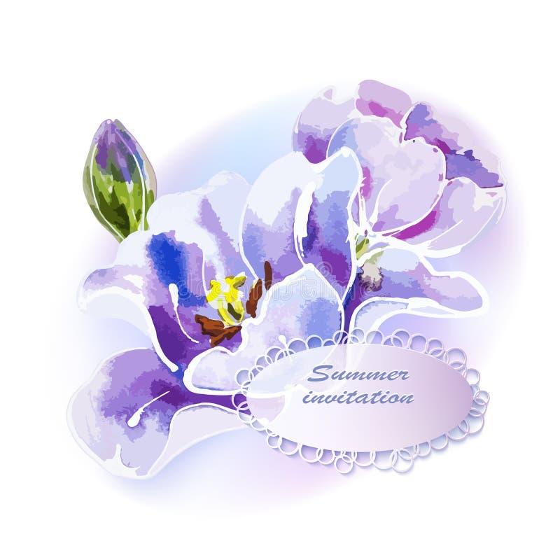 Purpurowy tulipan, akwarela obraz ilustracji