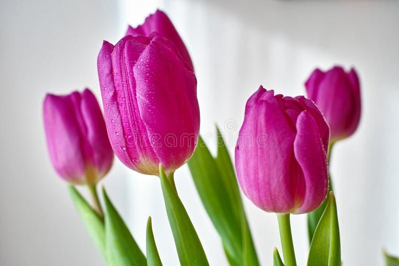 Purpurowy tulipanowy bukiet obraz royalty free