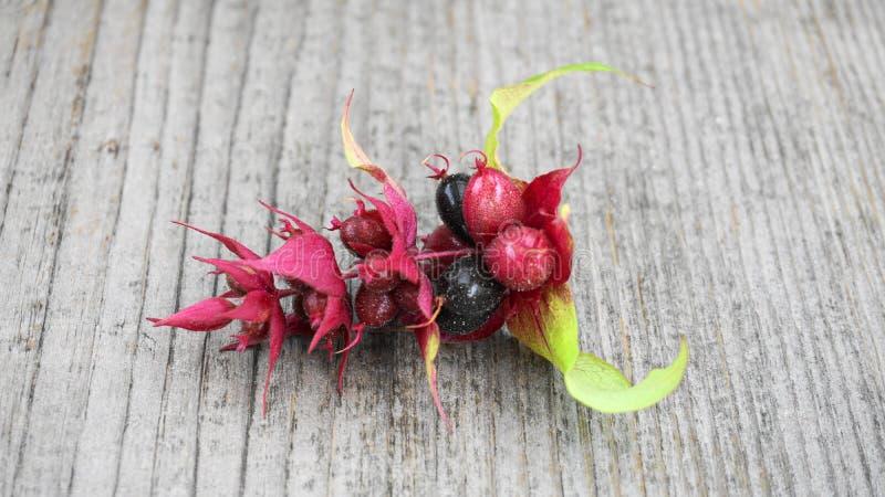 Purpurrot-schwarze Beeren des Himalajageißblattes mit den grünen Blättern oben lokalisiert auf hölzernem Hintergrundabschluß Ande stockfotos