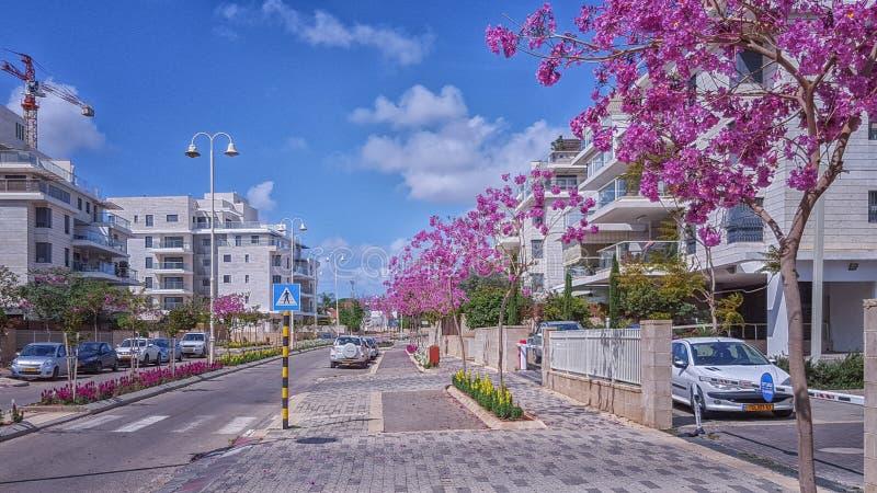 Purpurrote blühende Judasbäume auf Bürgersteig lizenzfreie stockfotos