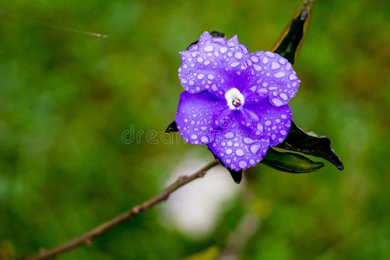 Purpurrote Blume auf grünem Hintergrund lizenzfreies stockbild
