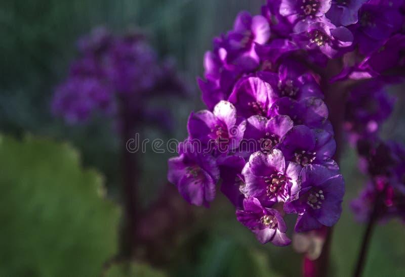 Purpurrote Blume in der Sommer-Schönheit Sun stockbilder