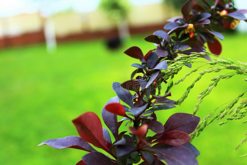 Purpurrote Blume meine Landschaft Ich liebe es stockbild