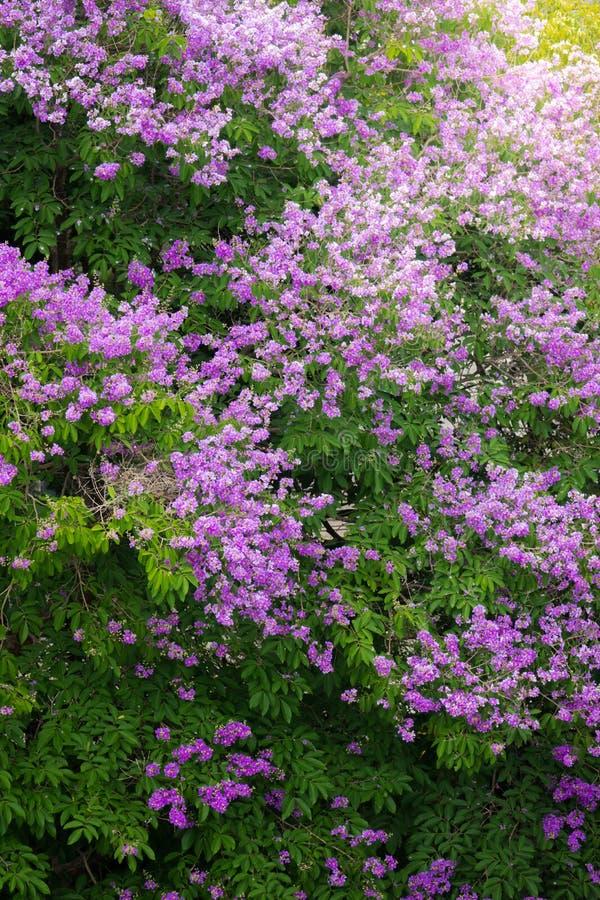 Download Purpurrote Blume Mit Einem Laubbaum Im Wald Stockfoto - Bild von nave, outdoor: 90236230