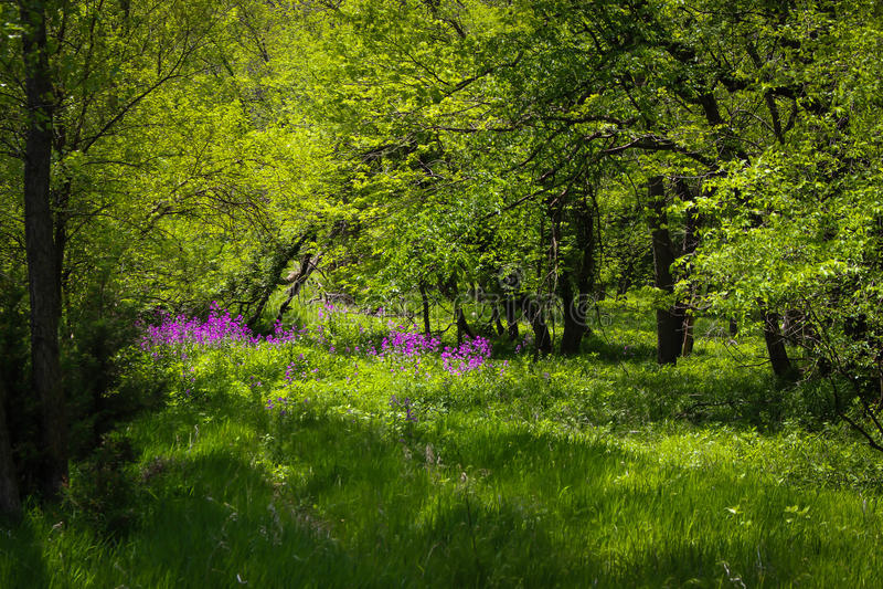 Purpurrote Blume tief versteckt in der Landschaft stockfotografie