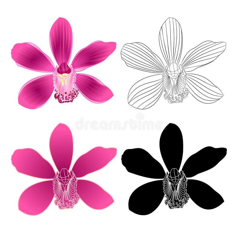 Purpurrote Blume tropischen Orchidee Cymbidium natürlich und Entwurf und Schattenbild auf weißer Hintergrundweinlese-Vektorillust lizenzfreie abbildung