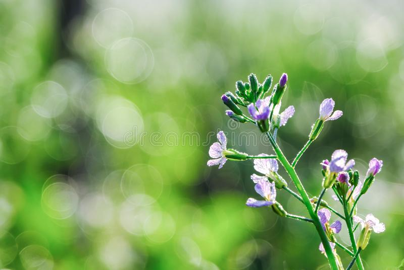 Purpurrote Blumen auf grünem schönem verwischt und bokeh lizenzfreie stockfotografie