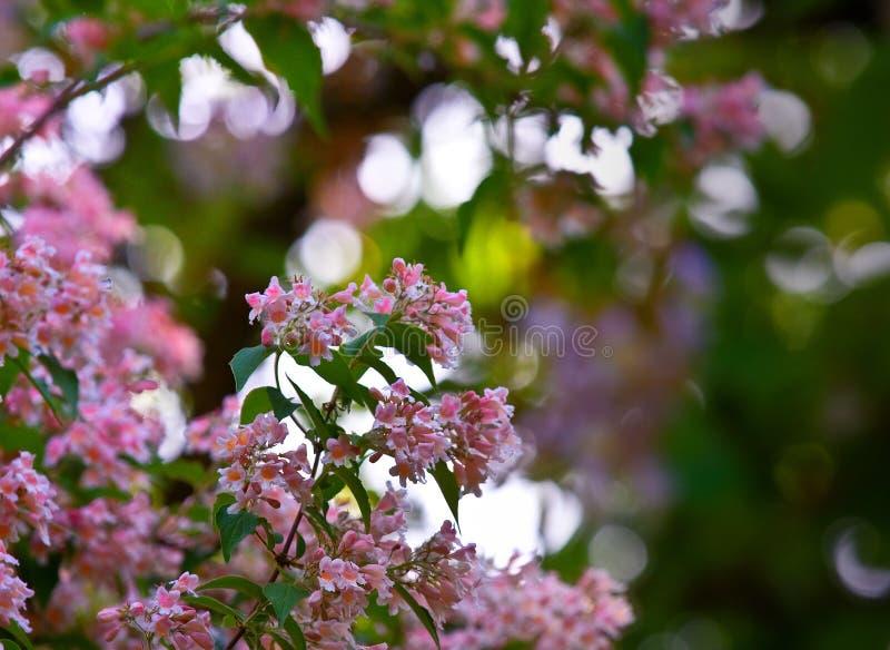 Purpurrote Blumen in der Blüte stockbild
