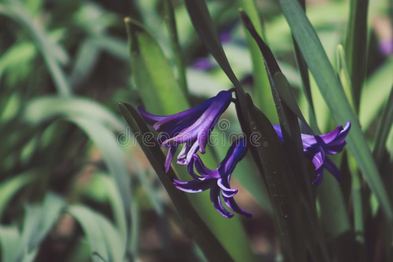 Purpurrote Blumen im Freien lizenzfreie stockbilder