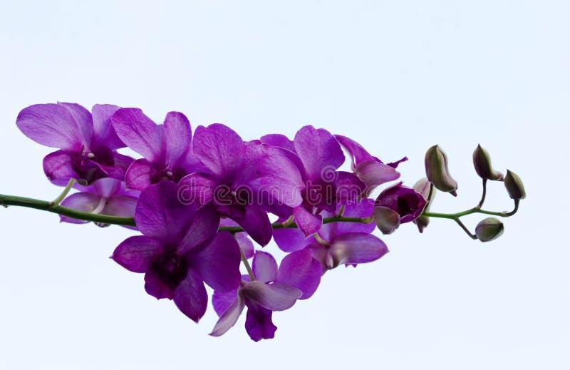 Purpurrote Blumen im Himmel lizenzfreies stockfoto