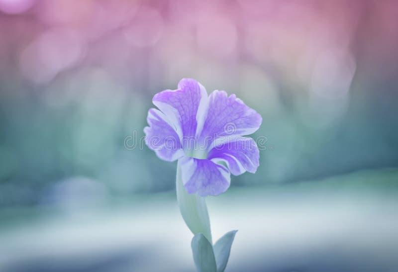 Purpurrote Blumen mit warmem Licht lizenzfreie stockfotos