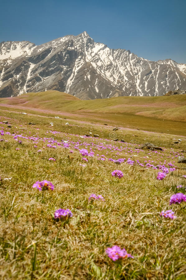 Purpurrote Blumen in Nepal lizenzfreie stockfotos