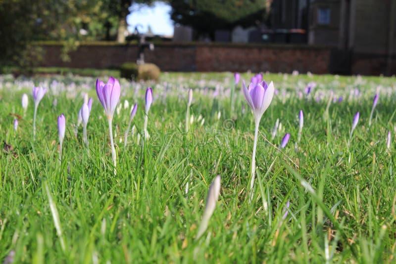 Purpurrote Blumen und Gras lizenzfreie stockbilder