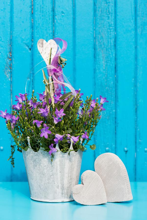 Purpurrote Glockenblume mit Herzen stockbilder