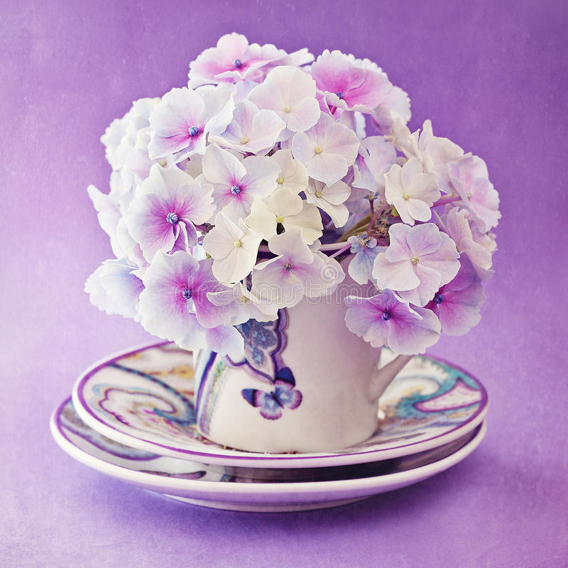 Purpurrote Hydrangea-Blumen lizenzfreie stockfotos