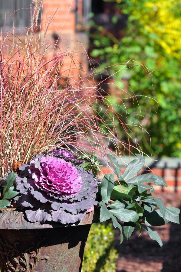 Purpurrote Kohl-Blume und rotes dekoratives Gras lizenzfreies stockfoto