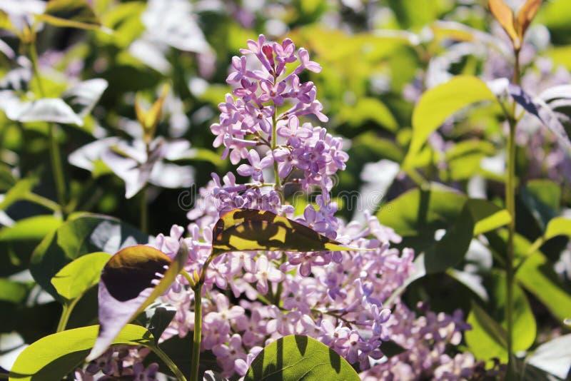 Purpurrote lila Blumen, die draußen an einem sonnigen Tag blühen lizenzfreies stockfoto