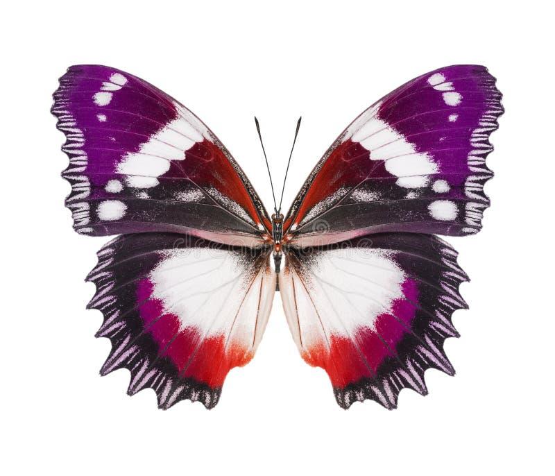 Purpurrote Orange des Schmetterlinges lizenzfreie stockfotos
