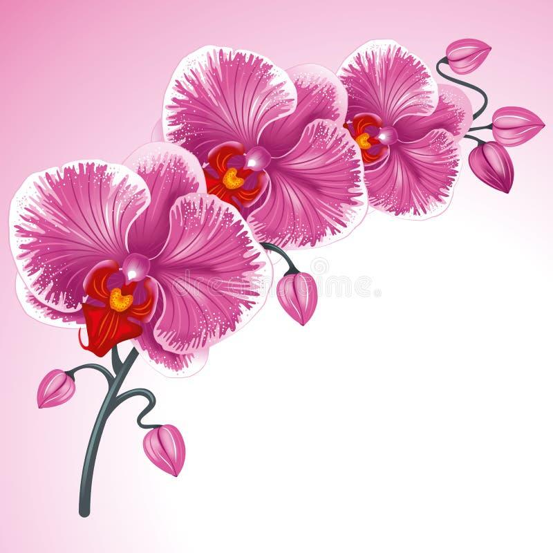Purpurrote Orchidee lizenzfreie abbildung