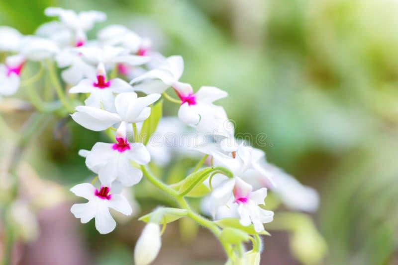 Purpurrote Orchideen in einem tropischen Wald stockfotografie